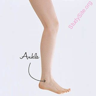 tibial meaning in hindi